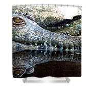 Crocodile X2 Shower Curtain