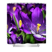 Crocus Amongst Us Shower Curtain