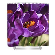 Crocus And Bee Shower Curtain