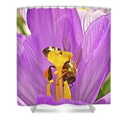 Crocus And The Bee Shower Curtain