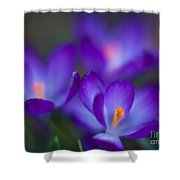 Crocus Blooms Shower Curtain