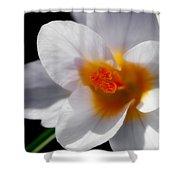 Crocus Blossom Shower Curtain