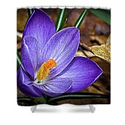 Crocus Emerging Shower Curtain