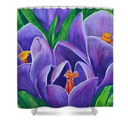 Crocus Flowers Shower Curtain