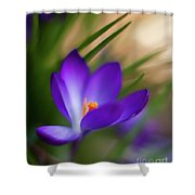 Crocus Light Shower Curtain