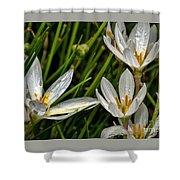 Crocus White Flowers Shower Curtain