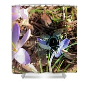 Crocuses And Fly Shower Curtain