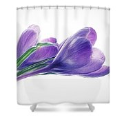 Crocuses - Impressions Shower Curtain