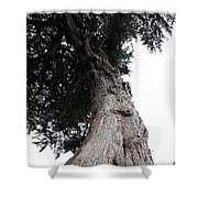 Crone Tree Shower Curtain