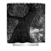 Crooked Oak Black And White Shower Curtain
