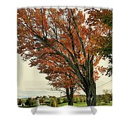Crooked Tree Shower Curtain