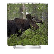 Cross Moose Shower Curtain