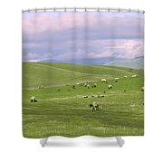 Cross Road Sheep Shower Curtain