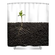 Cross-section Of Soybean Seedling Shower Curtain