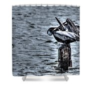 Crossed Bills Shower Curtain