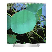 Crossing The Lily Pond Outback Number One Shower Curtain