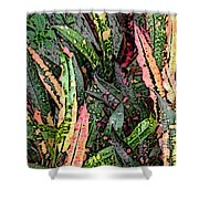 Croton 3 Shower Curtain by Eikoni Images