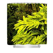 Croton Cascading Down The Hillside Shower Curtain
