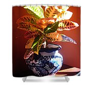 Croton In Talavera Pot Shower Curtain