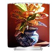 Croton In Talavera Pot Shower Curtain