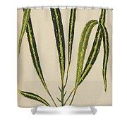 Croton Variegatum Angustifolium Shower Curtain