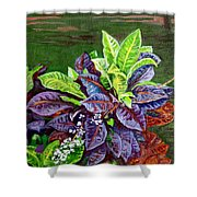 Crotons 2 Shower Curtain