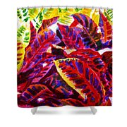 Crotons Sunlit 1 Shower Curtain