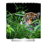 Crouching Tiger Hidden Cameraman Shower Curtain