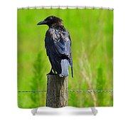 Crow 5 Shower Curtain