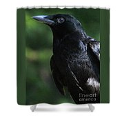Crow-6870 Shower Curtain