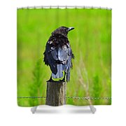 Crow 7 Shower Curtain