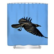 Crow Flyby Shower Curtain