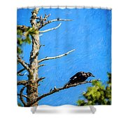 Crow In An Old Tree Shower Curtain
