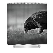 Crow In Grass Shower Curtain