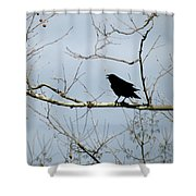 Crow In Sycamore Shower Curtain