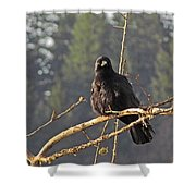 Crow Morning  Shower Curtain
