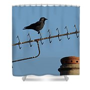 Crow On Aerial Shower Curtain