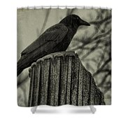 Crow Perched On A Old Column In Rain Shower Curtain
