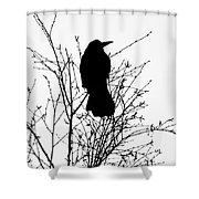 Crow Rook Perched In A Tree With Pare Branches In Winter Shower Curtain