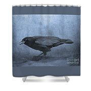 Crow Searching For Seashells Shower Curtain