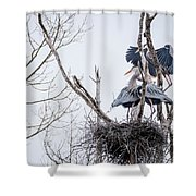 Crowded Nest Shower Curtain