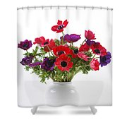 crown Anemone in a white vase Shower Curtain