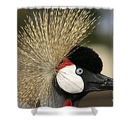 Crown Crane Close Up Shower Curtain