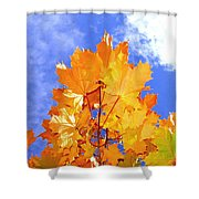 Crown Of Gold Shower Curtain