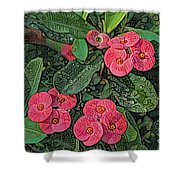 Crown Of Thorns Delight Shower Curtain