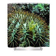 Crown Of Thorns In Pohnpei Shower Curtain