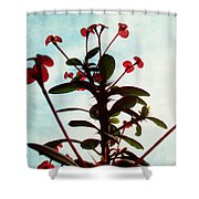 Crown Of Thorns Shower Curtain by Shawna Rowe