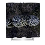Crown Royal Saguaro Shower Curtain