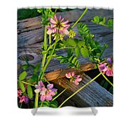 Crown Vetch 2 Shower Curtain