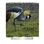 Crowned Crane Shower Curtain